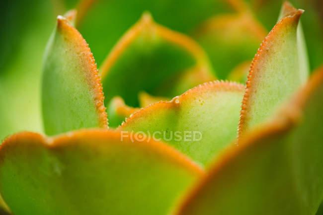 Close up tiro de folhas jovens em luz natural — Fotografia de Stock
