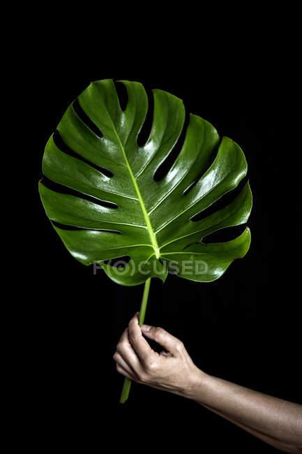 Рука держит большой зеленый лист — стоковое фото