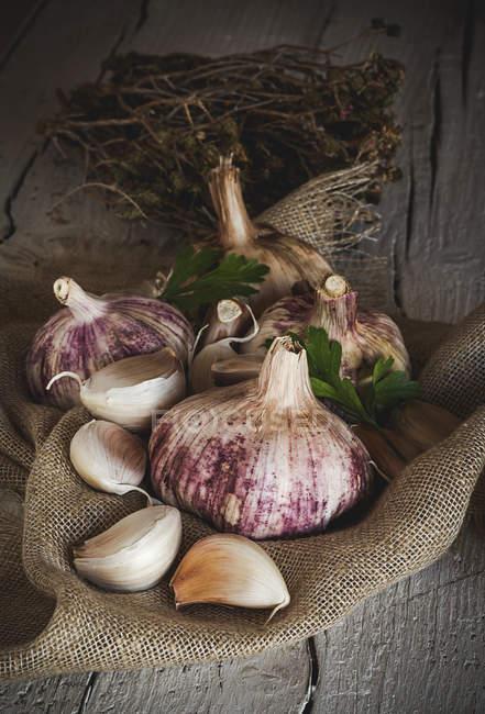 La naturaleza muerta el ajo maduro y fresco en el saqueo rural - foto de stock