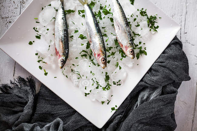 Directly above arrangement of fresh anchovy on ice — Stock Photo