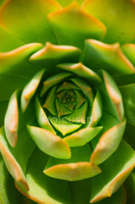 Directly above shot of agave leaves in natural light — Stock Photo