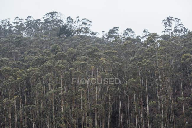 Arbres verts épais au paysage forestier . — Photo de stock