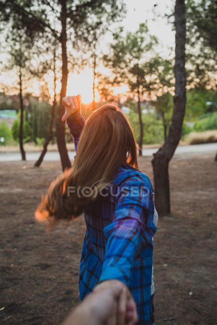 Vue arrière de la fille tirant la main dans la lumière du coucher du soleil à la forêt — Photo de stock