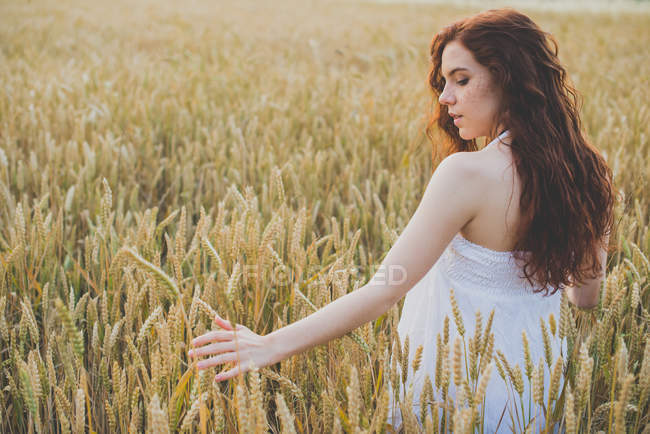 Rear view of girl with curvy hair in white dress walking in rye field and palming spikelets — Stock Photo