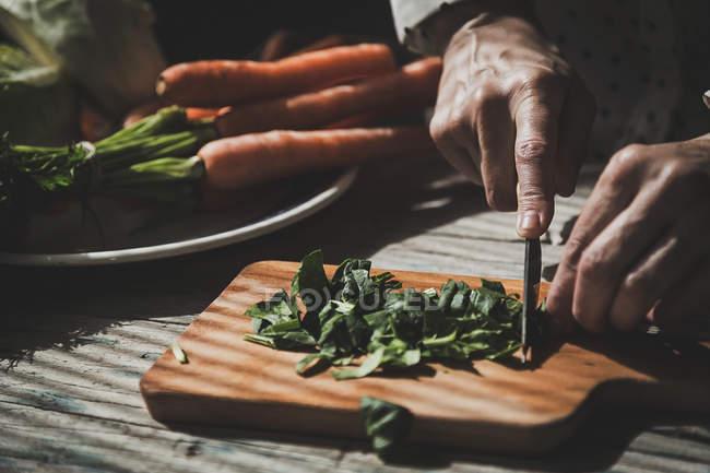 Close-up vista de mãos folhas de manjericão na placa de madeira de corte — Fotografia de Stock