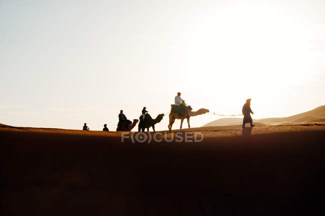 Caravan with camels walking in desert sand dunes under sun. — Stock Photo