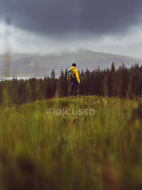 Visão traseira do viajante com mochila em pé no fundo da floresta em dia chuvoso . — Fotografia de Stock