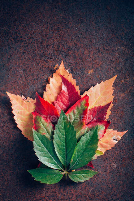 Pile of autumn gradient leaves — Stock Photo