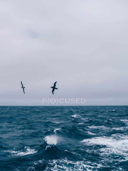 Gaivotas voando acima do mar azul — Fotografia de Stock