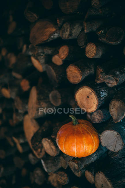Pumpkin in a pile of trunks — Stock Photo
