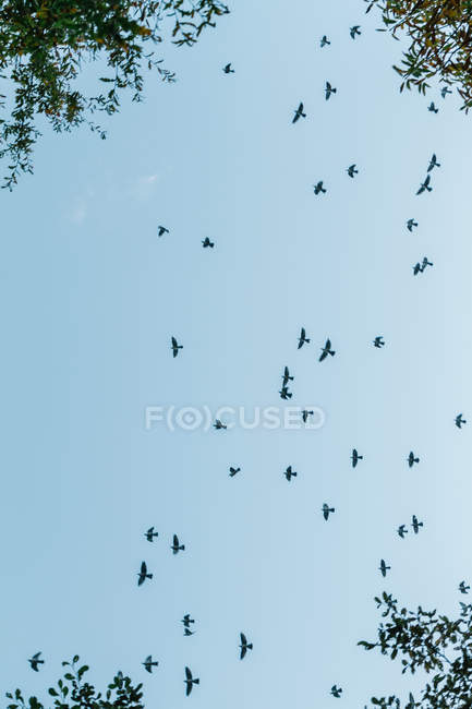 From below view of birds silhouettes flying high on background of blue sky. — Stockfoto