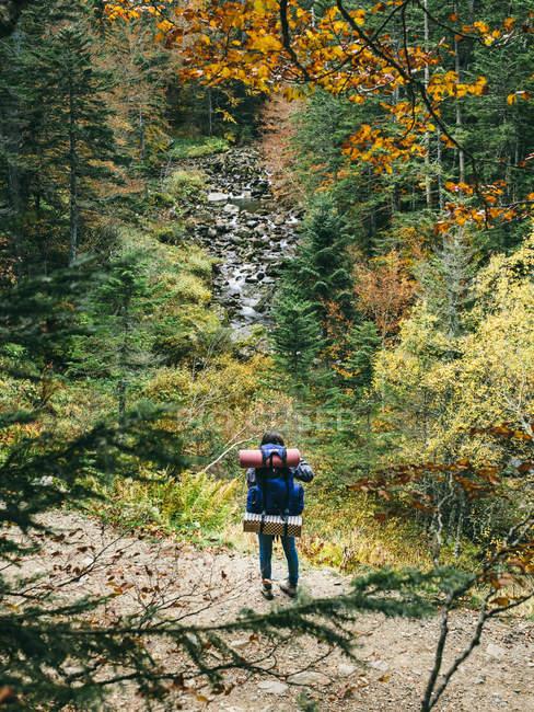 Viajante com mochila em pé na floresta — Fotografia de Stock