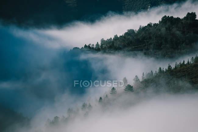 Paisaje de madera cubierto de colinas entre nubes de bruma - foto de stock