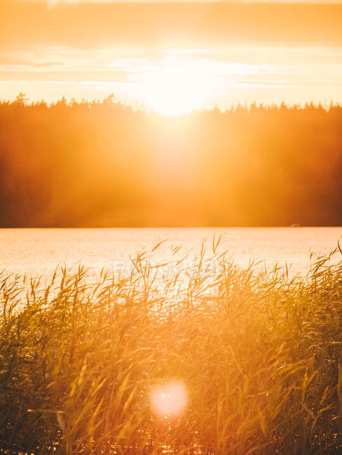 Lakeside grass at sunset — Stock Photo
