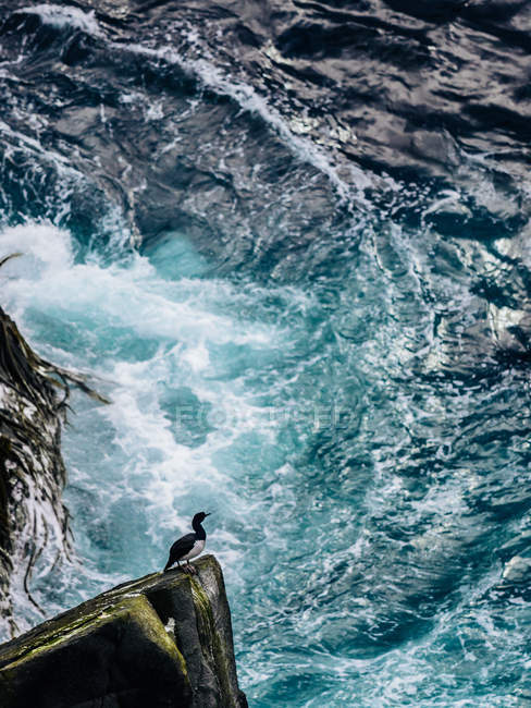 Seabird on rock over rough sea — Stock Photo