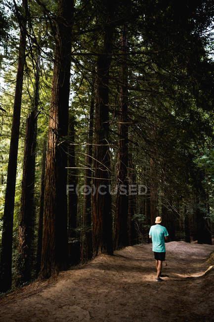 Вид сзади на человека, идущего по лесной дороге вдоль леса — стоковое фото