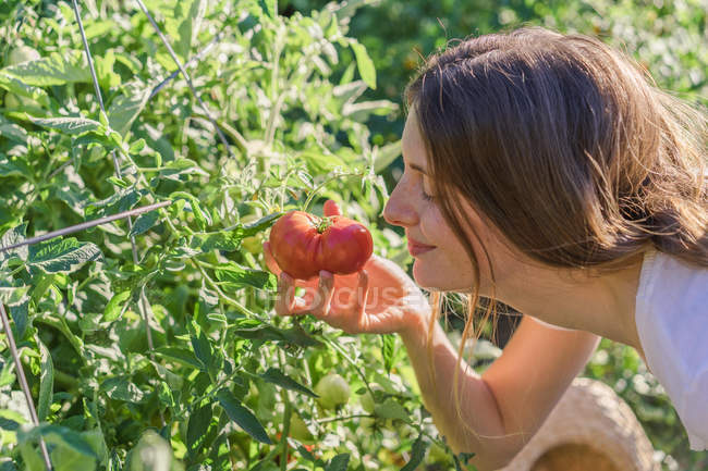Side view of woman smelling cultivated tomato at garden — Stock Photo