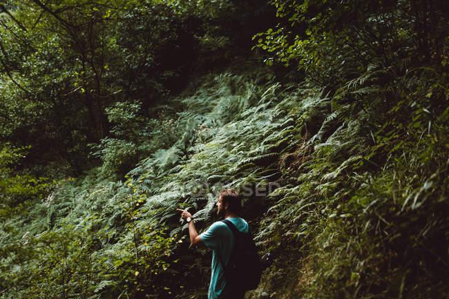 Rückansicht der Mann zu Fuß in den Wald und zeigen mit dem Finger beiseite — Stockfoto