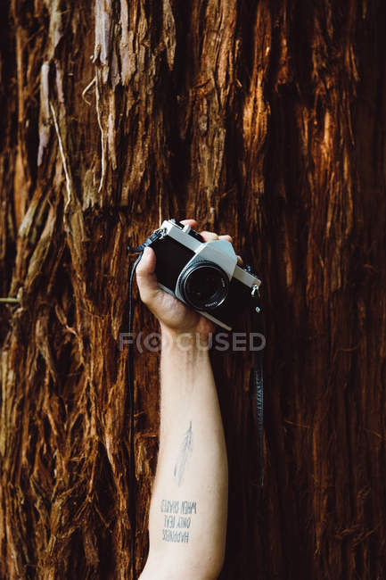 Crop hand leaning on tree trunk and holding camera — Stock Photo