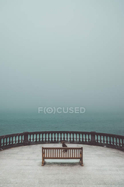 Dog sitting behind bench at terrace on background of foggy seascape — Stock Photo