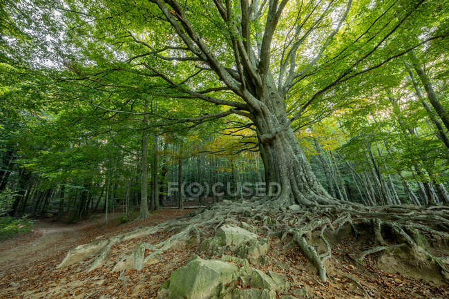 Scenic shot of old green trees at idyllic forest — Stock Photo