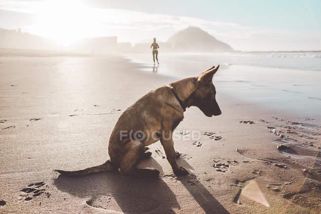 Seitenansicht des Deutschen Schäferhundes sitzt am Ufer — Stockfoto