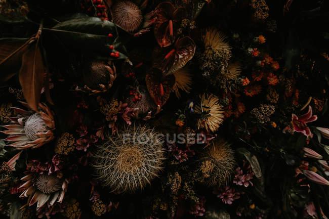 Close-up vista escuras plantas e cactos. — Fotografia de Stock