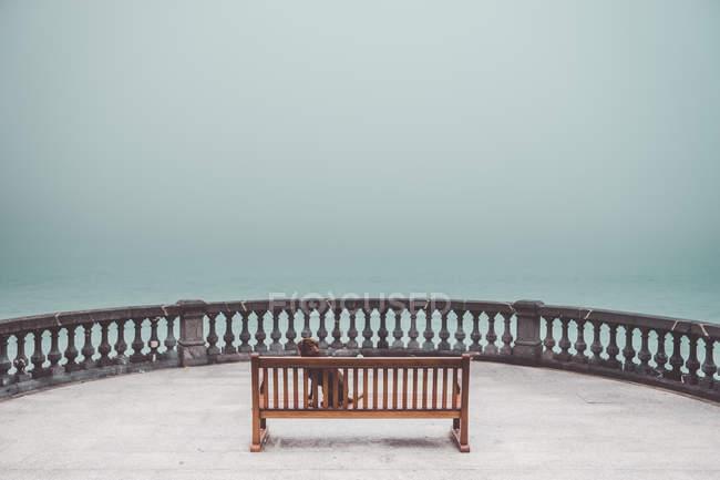Hund sitzt auf Bank auf Terrasse über nebligem Meer — Stockfoto