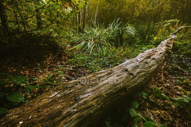 Gefallenen Baumstamm im grünen Wald — Stockfoto