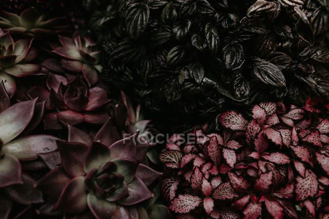 Сверху видны различные растения . — стоковое фото