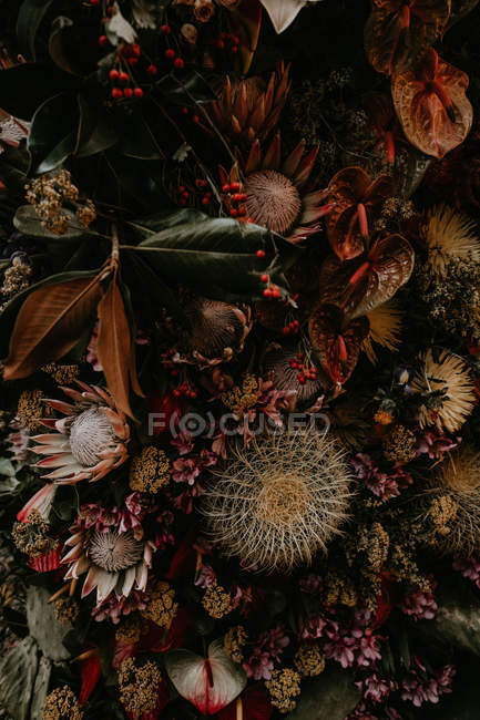 Close up view of floral composition of flowers and cacti — Stock Photo