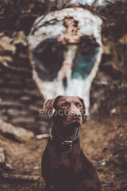 Charming brown dog sitting on background of wall with white stain remaining skull. — Stock Photo