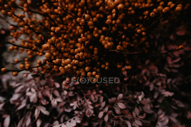 Close up view of bunch of unusual pink and orange flowers — Stock Photo