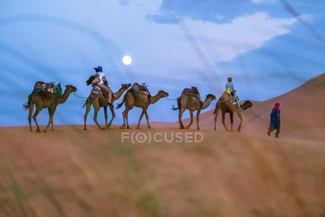 Вид сбоку движущихся караван в песок пустыни — стоковое фото