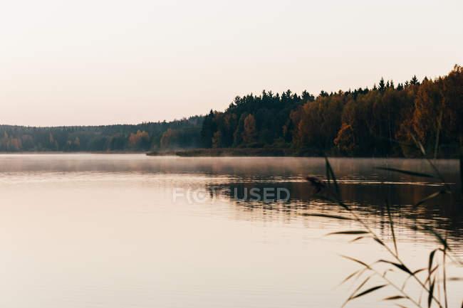 Paysage du lac brumeux calme arboré sur rives. — Photo de stock