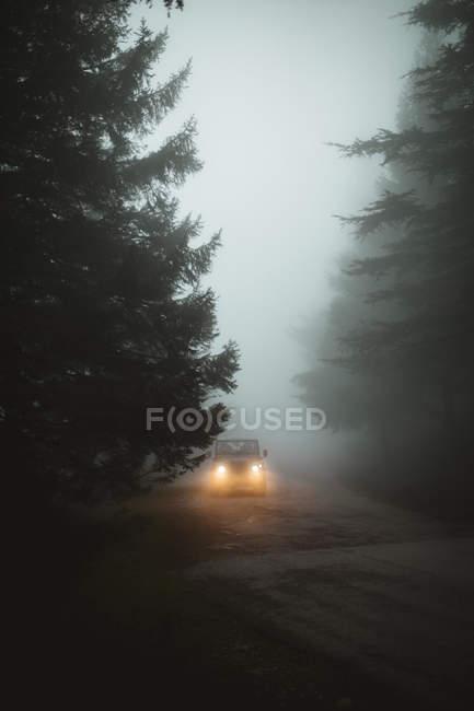 Автомобиль с включенными фарами едет по туманной дороге в лесу . — стоковое фото