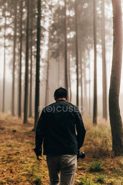 Vista posterior del viajero a pie en el oscuro bosque niebla - foto de stock