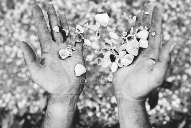 Crop hands spilling in air pile of seashells. — Stock Photo