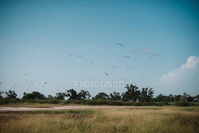 Переглянути птахів летить над луг в сонячний день безхмарне. — стокове фото