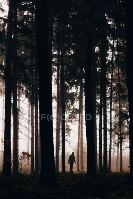 Silueta de Traveler en el oscuro bosque niebla - foto de stock