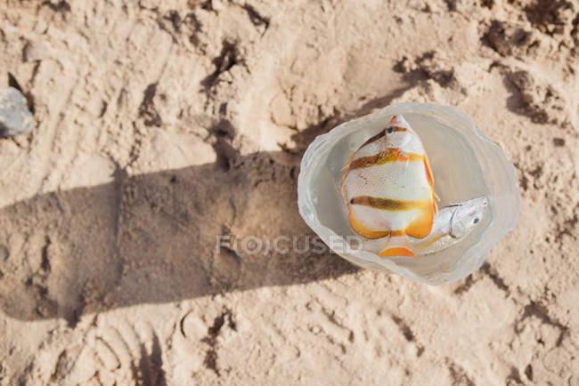 Directamente desde la vista de dos peces tropicales flotando en la botella de plástico sobre la arena. - foto de stock