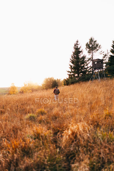 Rear view of traveler walking in golden country field — Stock Photo
