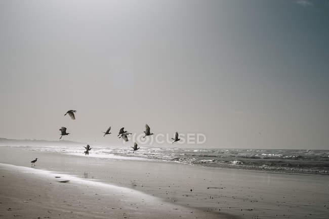 Птахи, що летить над піщаного узбережжя, в океані в Сонячний вечір. — стокове фото
