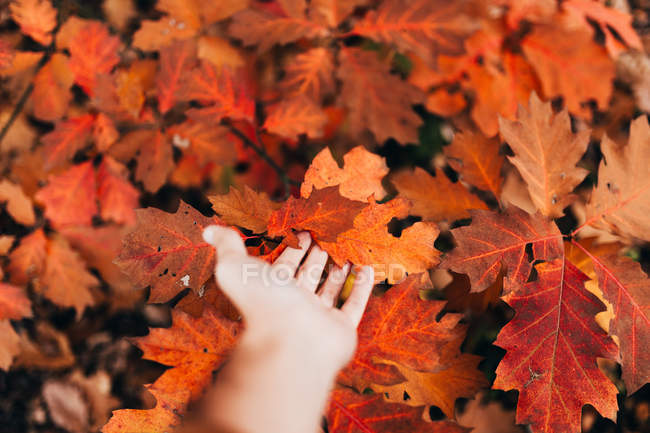 Crop image of male hand touching gently red autumnal foliage. — Stock Photo