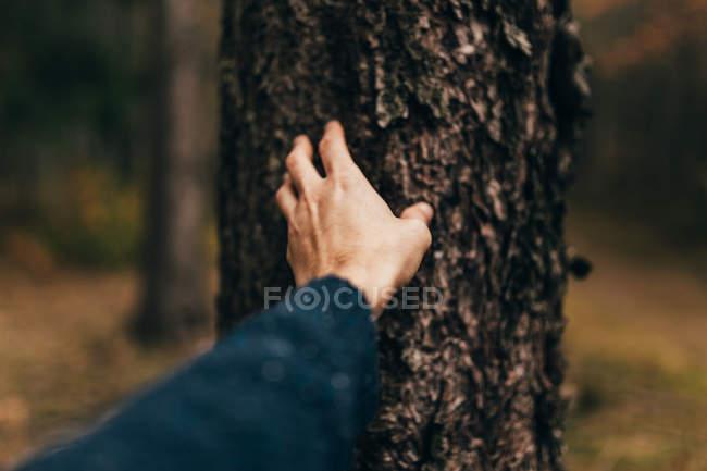 Männliche Hand erkundet raue Oberfläche der Baumstammrinde. — Stockfoto