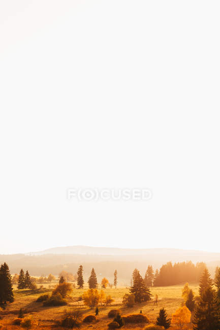 Picturesque landscape of golden lawns over bright white sky — Stock Photo