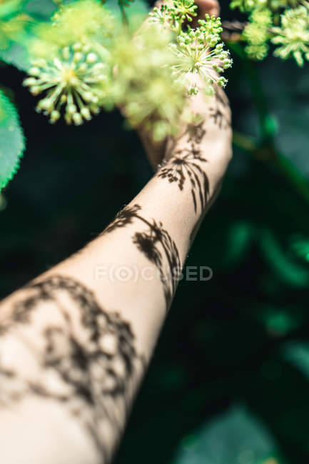 Crop hand taking green bloom from tree branch — Stock Photo