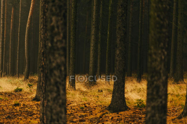 Troncos de árboles en jardín dorado en otoño - foto de stock