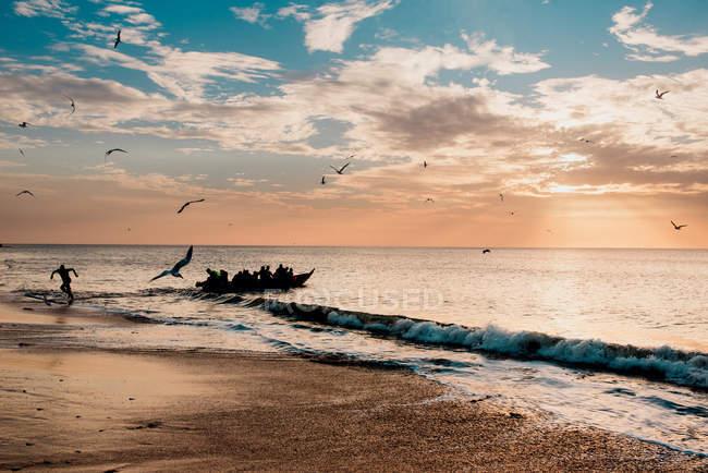 Oiseaux attaquant une personne courant sur une plage en arrière-plan d'un bateau se tenant près du rivage, Goree, Sénégal — Photo de stock