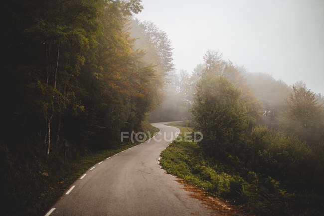 Asphalt road running through misty forest — Stock Photo
